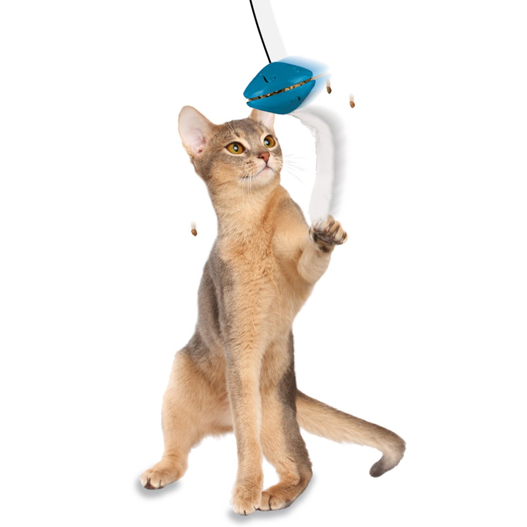 Fun Cat Toys : Fun cat toys bing images